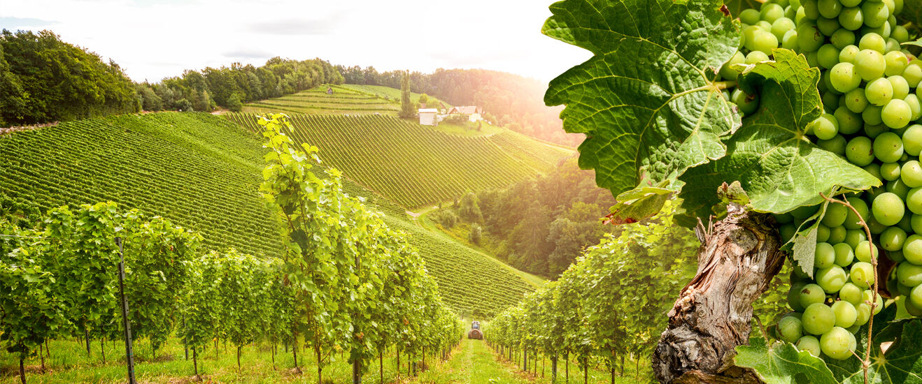 95% drift reduction in vineyards and up to 99% in orchards